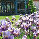 Les jardins d'eau Sarlat