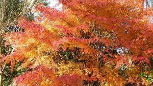 l'automne parc botanique de Cornouaille