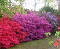 couleurs chatoyantes parc botanique