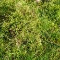 mousse dans le jardin encore