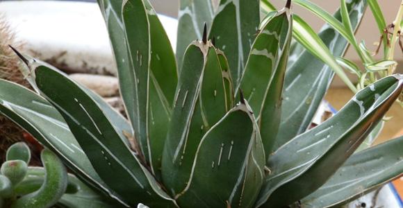 5 plantes du jardin toxiques pour nos chiens et chats for Plante d appartement