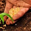 Calendrier des semis votre service - Comment semer du persil ...