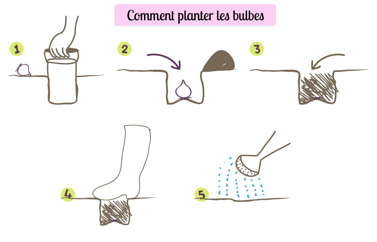 bulbe a planter